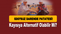 Darende'nin Organik Patatesi Hak Ettiği İlgiyi Bekliyor