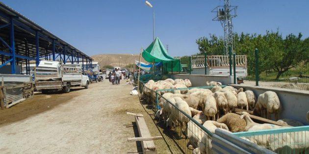 Darende'de Kurban Bayramı Böyle Geçti (GALERİ)
